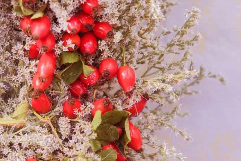 Przegląd polskich ziół leczniczych. Zobacz, co możesz zebrać na łące