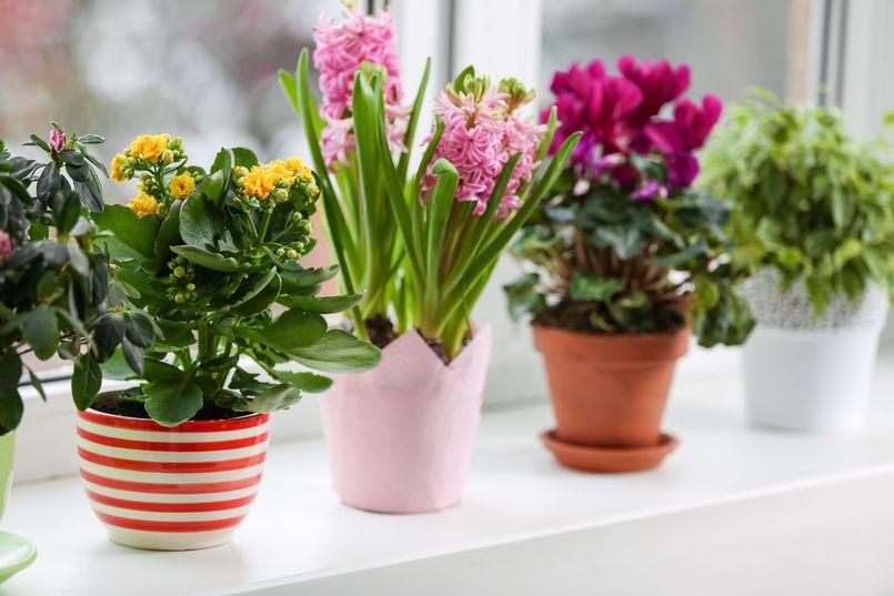Łatwe w uprawie rośliny doniczkowe. Część II