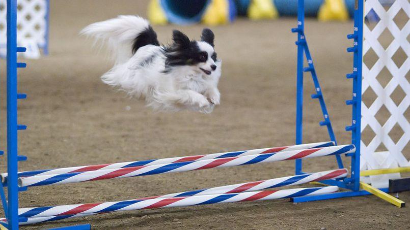 Agility - sport i hobby dla Ciebie i Twojego psa
